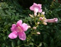 一个小组狂放的桃红色花 图库摄影