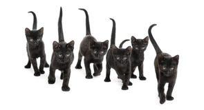 一个小组的正面图黑小猫 免版税库存图片