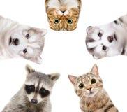 一个小组的画象动物 免版税图库摄影