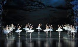 一个小组美好的白色天鹅芭蕾天鹅湖 免版税库存照片