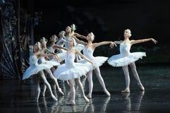 一个小组美好的白色天鹅芭蕾天鹅湖 库存照片
