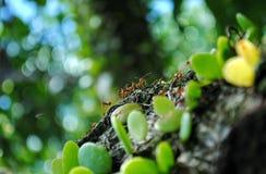 一个小组蚂蚁 库存照片