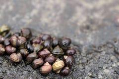 一个小组蜗牛 免版税库存照片