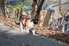 一个小组街道猫 库存照片