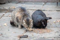 一个小组街道猫 图库摄影