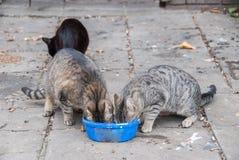 一个小组街道猫 免版税库存照片