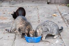 一个小组街道猫 免版税库存图片