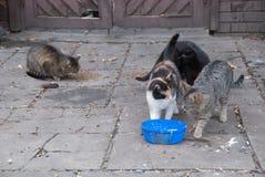 一个小组街道猫 库存图片
