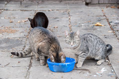 一个小组街道猫 免版税图库摄影