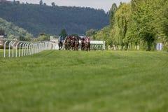 一个小组赛跑车手从在一条绿色象草的轨道的开始的箱子寻找了 在竞赛线路竞争的车手 免版税库存照片