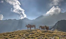 一个小组马在Aiguille d'Arves m前面的一个草甸 库存照片