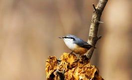 一个小组鸟的照片 图库摄影