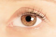 一个少妇的布朗眼睛 特写镜头 在虹膜的焦点 免版税库存图片