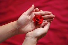 一个少妇的手在她的手上的拿着一朵红色玫瑰 库存图片