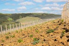 一个山坡的葡萄园在伯根地,法国 免版税图库摄影