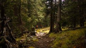 一个山行迹的远足者在森林 免版税库存照片