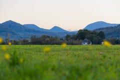 一个山谷的美丽的高山草甸在日落 免版税库存图片