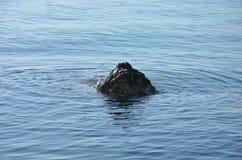 一个岩石在海 免版税库存图片