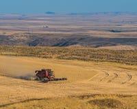 一个工作有看法 麦子收获在高沙漠 库存图片