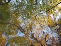 一个巨大的水坑:秋天树水的表面上的参差不齐的反射与黄色和绿色叶子和棕色树干的 免版税库存图片