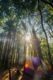 一个帐篷在密林 库存图片