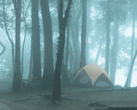 一个帐篷在有薄雾的森林里 库存照片