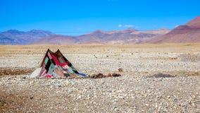 一个帐篷在沙漠 免版税库存图片
