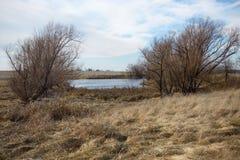 一个干燥象草的风景的冻冬天池塘 免版税库存图片