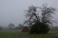 一个干草堆和一棵孤立树在雨中 库存照片