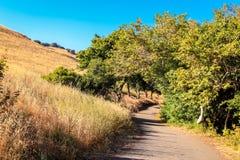 一个平安的走道通过树在公园 免版税库存照片