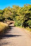 一个平安的走道通过树在公园 库存照片