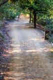 一个平安的走道通过树在公园 免版税图库摄影