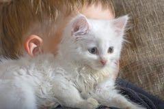 一个年轻和快乐的小男孩使用与在长沙发的一只白色猫 在长沙发的一只小的白色蓬松猫 库存照片