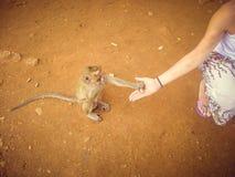 一个年轻白肤金发的女孩在泰国喂养一只猴子 旅游业 库存照片