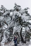 一个年轻,俏丽的女孩摆在一棵大积雪的杉木前面下 图库摄影