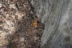 一个幽静椒盐脆饼,说谎由路边,被忘记和孤独 免版税图库摄影