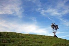 一个幽静结构树 免版税库存照片