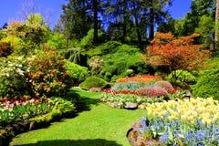 一个庭院春天,维多利亚,加拿大的五颜六色的花 图库摄影