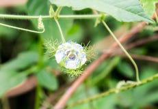 从一个庭院的未认出的花在阿多埃基蒂尼日利亚 免版税库存图片