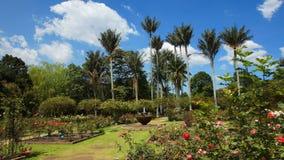 一个庭院的看法有一个喷泉的在中心在波哥大植物园里  库存照片
