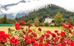 一个开放领域的一个玫瑰园在以云彩和山为目的烟特勒根盖的旅馆、房子作为背景 免版税库存图片