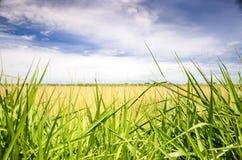 一个开放领域的风景与绿草的 库存照片