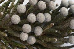 一个异乎寻常的植物特写镜头的分支 库存照片