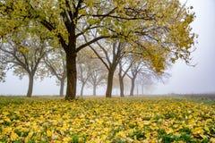 一个异常,美丽和神奇有薄雾的森林 库存照片
