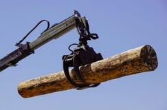 一个强有力的树日志记录器 免版税库存图片