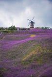 一个形成淡紫色领域公园 库存图片