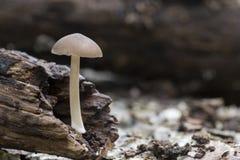 一个微小的蘑菇 库存图片
