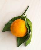 一个成熟蜜桔的分支与被隔绝的绿色叶子的 图库摄影