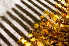 一个抽象秋天视图篱芭阴影和下落的叶子 免版税图库摄影