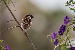 一个斜向一边的栖息处的小用羽毛装饰的朋友 免版税库存图片